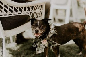 Dog at wedding with floral hoop around neck