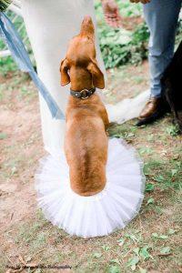 Dog in white tutu at wedding