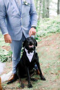 """Dog as """"Best Man"""" in tuxedo collar"""