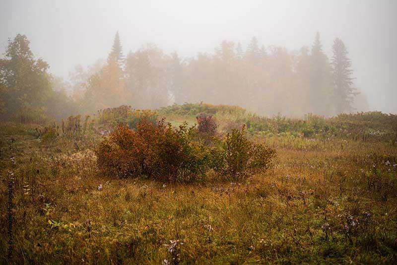Misty fall wedding day